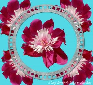 Denver Flower Mashup