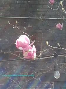 Auburn Big Flower