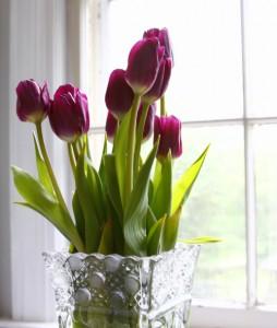 Anna's Tulips