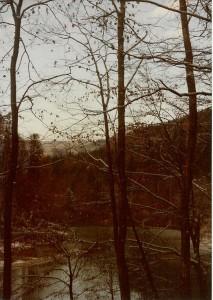 Dornbirn Trees