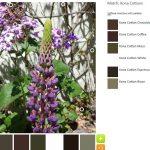 ColorPlay May 26 n.7